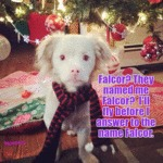 Falcor? They Named Me Falcor?