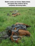 Modern Cavalry War Horses Trained Good