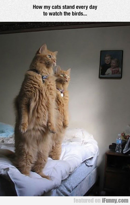 How My Cats Stand Every Day