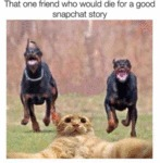 That One Friend Who Would Die For A Good Snapchat