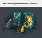 How Cats And Dogs See Themselves In The Mirror...