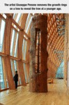 The Artist Giuseppe Penone Removes The Growth Ring