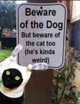 Beware Of The Cat Too