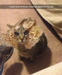 I Used One Of Those Makeup Apps On My Cat