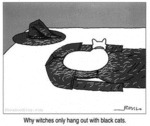 Why Witches Only Hang Out With Black Cats
