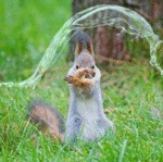 Waterbending Squirrel