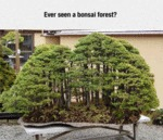 Ever Seen A Bonsai Forest?