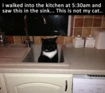 I Walked Into The Kitchen At 5.30am