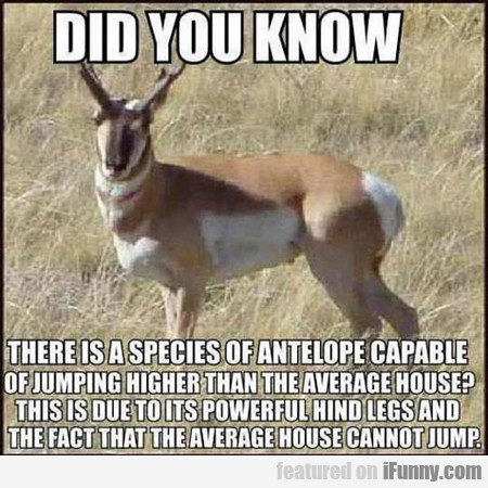 Did You Know There Is A Species Of Antilope...