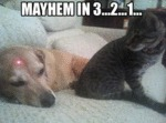 Mayhem In 3... 2... 1...