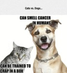 Cats Vs. Dogs Problem