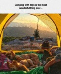 Camping With Dogs Is The Most Wonderful Thing Ever