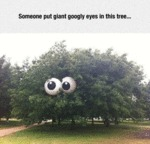 Someone Put Giant Googly Eyes In This Tree...