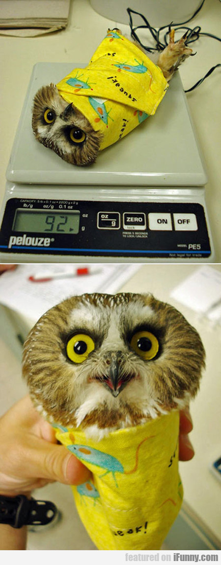 Just An Owl Burrito