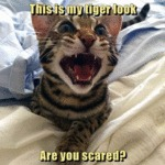 This Is My Tiger Look. Are You Scared?
