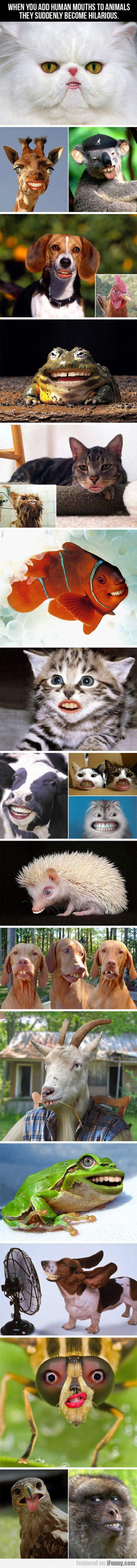 When You Add Human Mouths To Animals