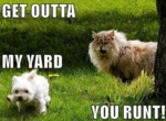 Get Outta My Yard You Runt!