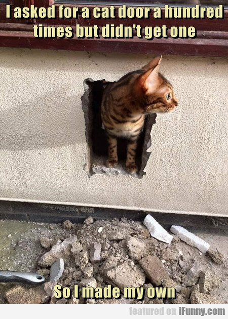 I Asked For A Cat Door A Hundred Times But...