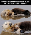 Otters Snuggle When They Sleep So...