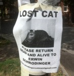 Lost Cat - Please Return Dead And Alive