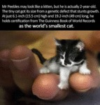 World's Smallest Cat