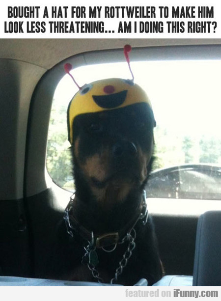 Bought A Hat For My Rottweiler To Make Him