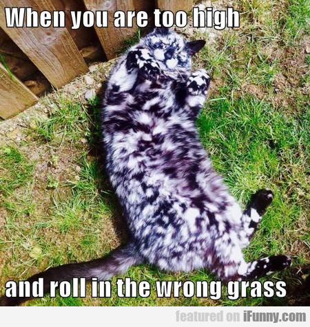 When You Are Too High And Roll In The Wrong Grass