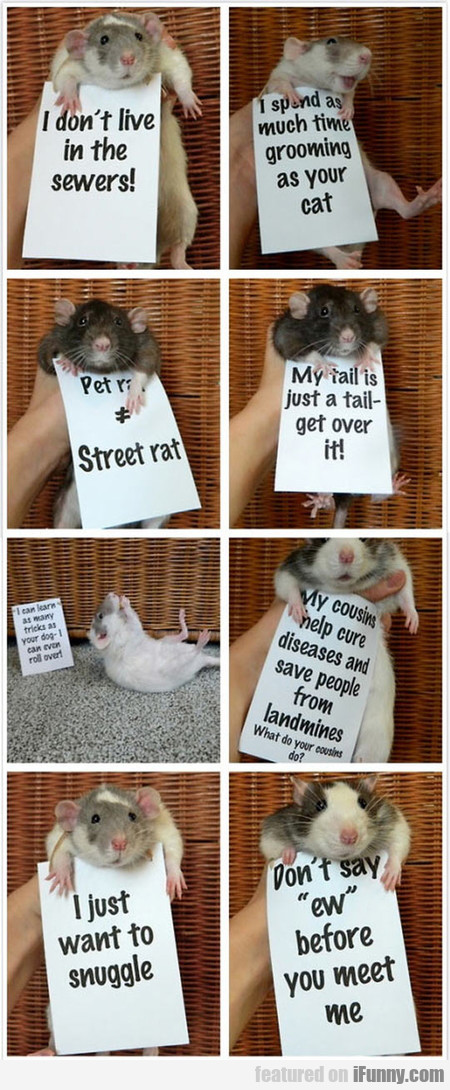 Messages From Rats