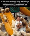 In China, Animal Rescuers Paid Around $8000 To Buy