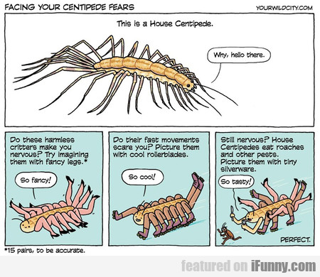 Facing Your Centipede Fears