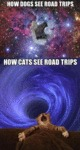 The Way Dogs And Cats See Road Trips