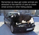Remember As Days Get Colder Animals Are Attracted
