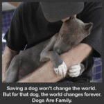 Saving A Dog Won't Change The World