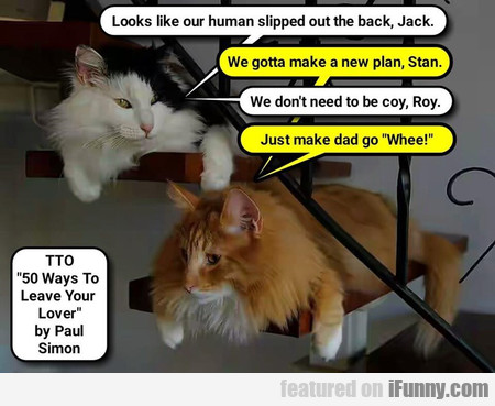 Looks like our human slipped out the back, Jack