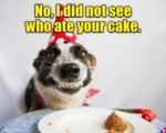 No, I Did Not See Who Ate Your Cake