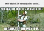When Teachers Ask Me To Explain My Answer...