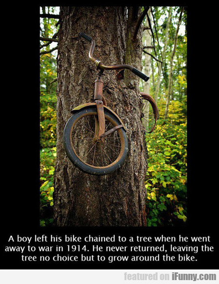A Boy Left His Bike Chained To A Tree In 1914
