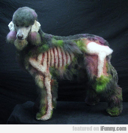 Ever Seen A Zombie Poodle