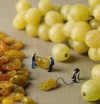 How Grapes Are Really Made