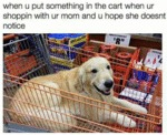 When U Put Something In The Cart