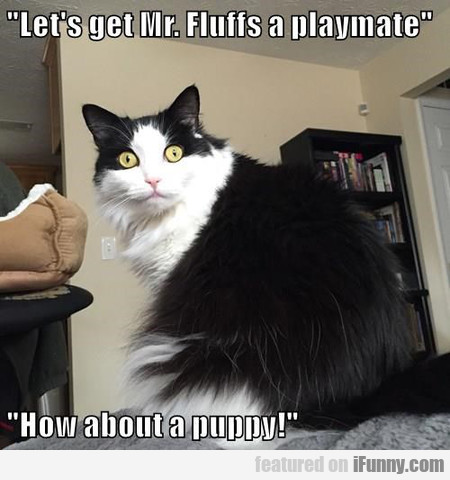 let's get mr. fluffs a playmate