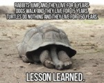 Turtles Do Nothing And They Live For 150 Years