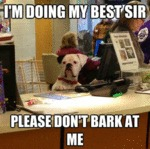 I'm Doing My Best, Sir, Please Don't Bark At Me