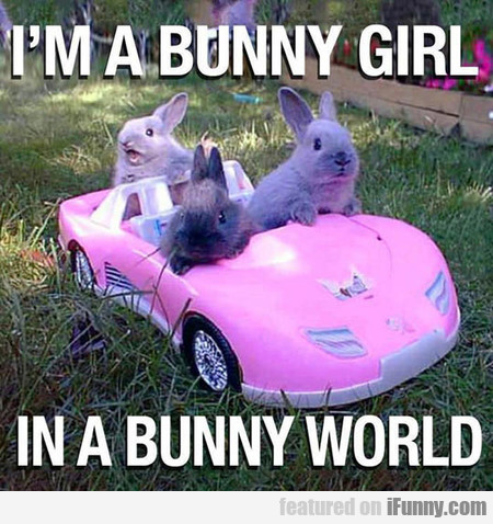 i'm a bunny girl in a bunny world