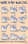 Proper Ways To Pet Your Cat