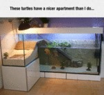 These Turtles Have A Nicer Apartment Than I Do...