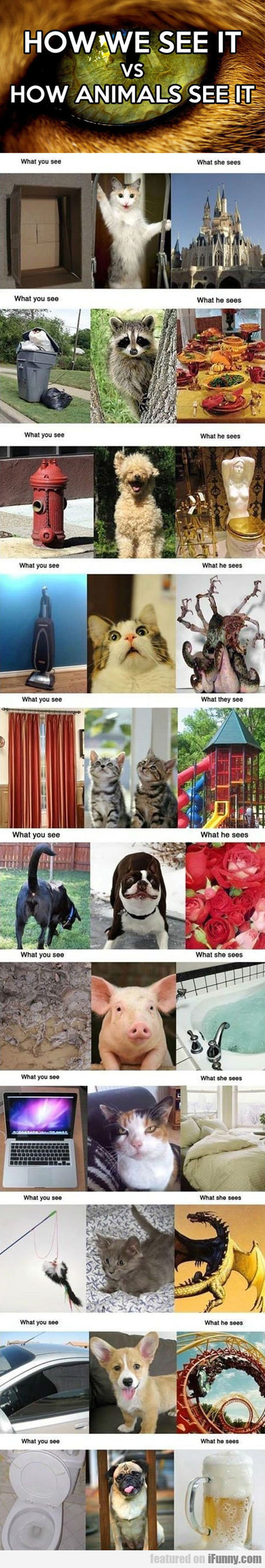 How We See It Vs How Animals See It