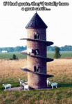 If I Had Goats, They'd Totally Have A Goat Castle