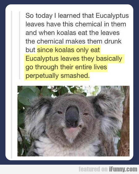 Eucalyptus Leaves Have This Chemical In Them
