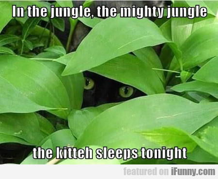 In The Jungle, The Mighty Jungle The Kitteh
